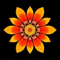 Orange Gazania I (color, black)