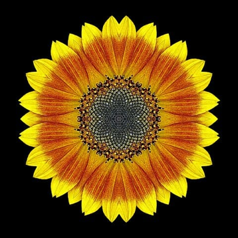 Orange and Yellow Sunflower I