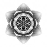 Water Lily X (b&w, white)