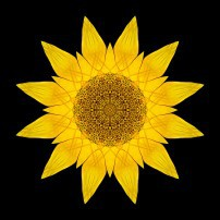Yellow Sunflower X (color, black)