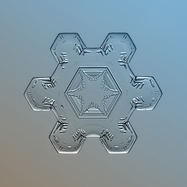 Snow_Flower_600x600.jpg