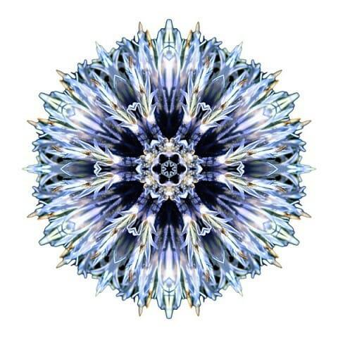 Blue Globe Thistle I