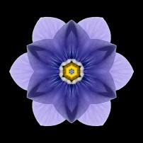 Blue Pansy I (color, black)