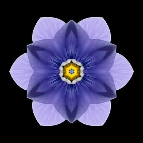 Blue Pansy I