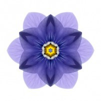 Blue Pansy I (color, white)