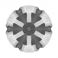 California Poppy I (b&w, white)
