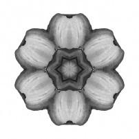 Daylily I (b&w, white)