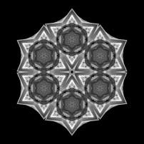 Dying Amaryllis III (b&w, black)