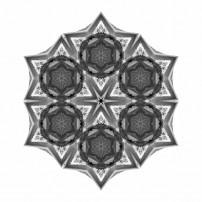 Dying Amaryllis III (b&w, white)