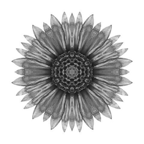 Galliardia Arizona Sun I