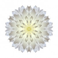 Giant White Dahlia V (color, white)