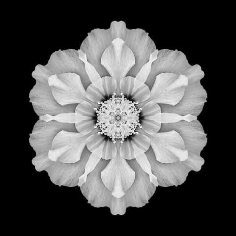 Hibiscus rosa-sinensis I