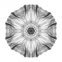 Iceland Poppy II (b&w, white)