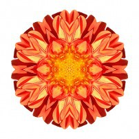Orange Dahlia II (color, white)