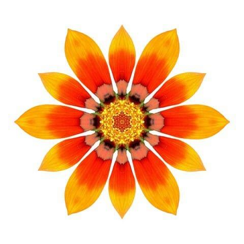 Orange Gazania I