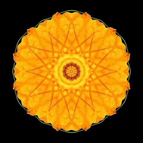 Orange Nasturtium I