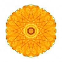 Orange Nasturtium I (color, white)