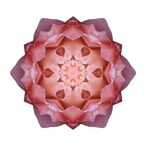 Pink Fall Rose I