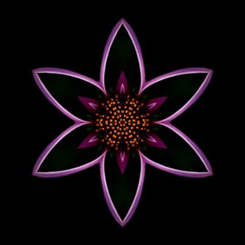 Purple Echinacea I