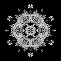 Queen Annes Lace I (b&w, black)