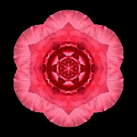 Red Begonia I