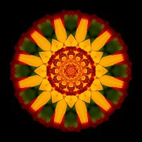 Red and Yellow Marigold V (color, black)