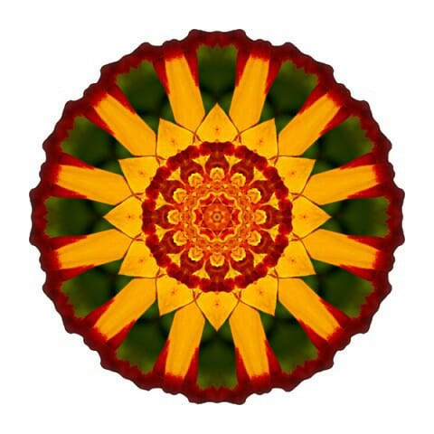 Red and Yellow Marigold V