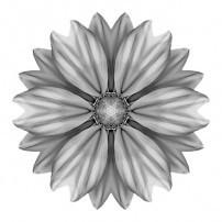 Rudbeckia Prairie Sun I (b&w, white)