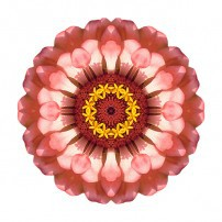 Salmon Zinnia Elegans IV (color, white)