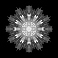 Spoon Chrysanthemum I (b&w, black)