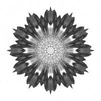 Spoon Chrysanthemum I (b&w, white)