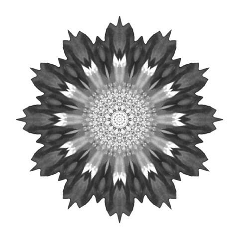 Spoon Chrysanthemum I