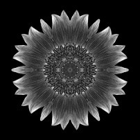 Sunflower Moulin Rouge I (b&w, black)