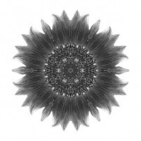 Sunflower Moulin Rouge I (b&w, white)