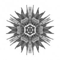 Violet Chrysanthemum IV (b&w, white)