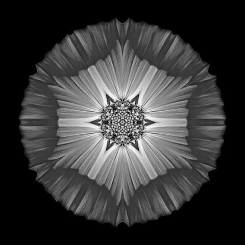 Violet Cosmos II