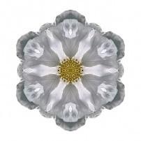White Beach Rose III (color, white)