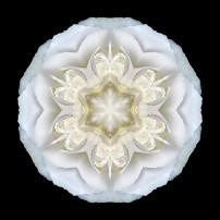 White Begonia II (color, black)