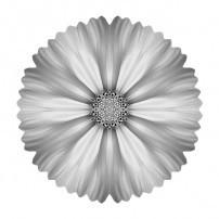 White Cosmos I (b&w, white)