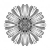 White Daisy I (b&w, white)