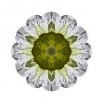 White Petunia IV (color, white)