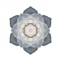 White Rose I (color, white)