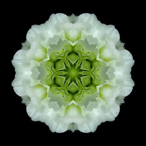 White and Green Begonia I