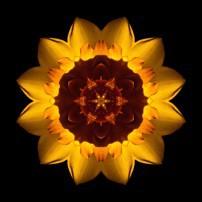 Yellow Daffodil I (color, black)