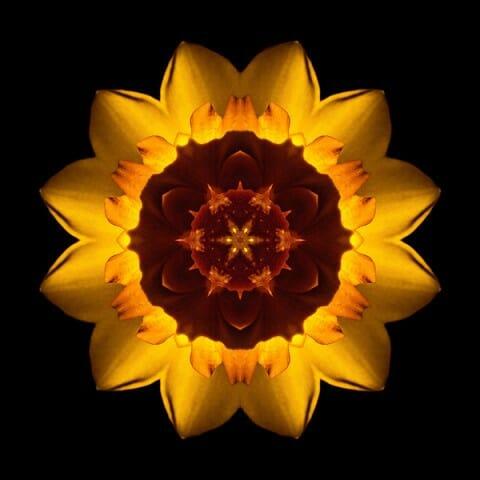 Yellow Daffodil I