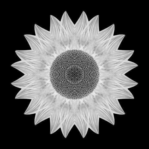 Yellow Sunflower IX