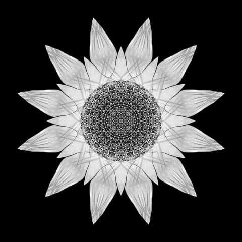 Yellow Sunflower X